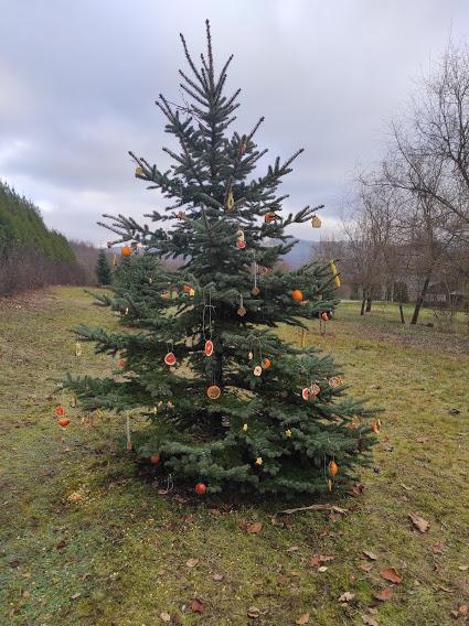 Karácsonyi kirándulás